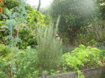 Canteiro de plantas medicinais